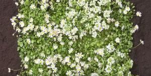 Plantas ecológicas